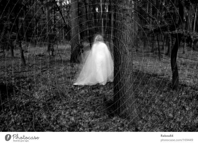 Holla die Waldfee Schwarzweißfoto Außenaufnahme Dämmerung Langzeitbelichtung Bewegungsunschärfe feminin 1 Mensch Natur Baum entdecken ästhetisch außergewöhnlich