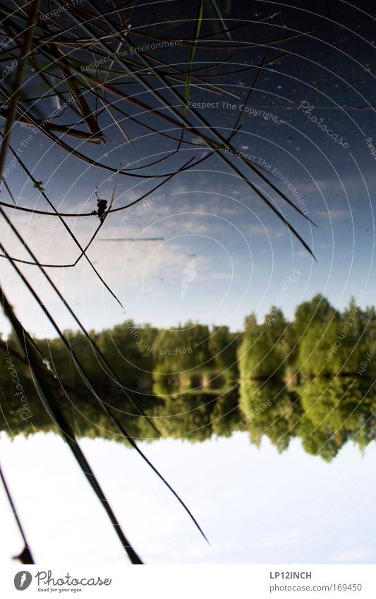 Parallele Natur Wasser blau weiß grün Sommer Freude Wald Erholung Umwelt Landschaft Freiheit Glück träumen See Zufriedenheit