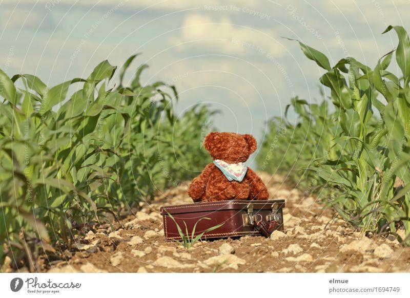 Teddy Per macht Pause Natur Ferien & Urlaub & Reisen Landschaft Einsamkeit Wege & Pfade Glück klein Horizont träumen Feld wandern sitzen Lebensfreude