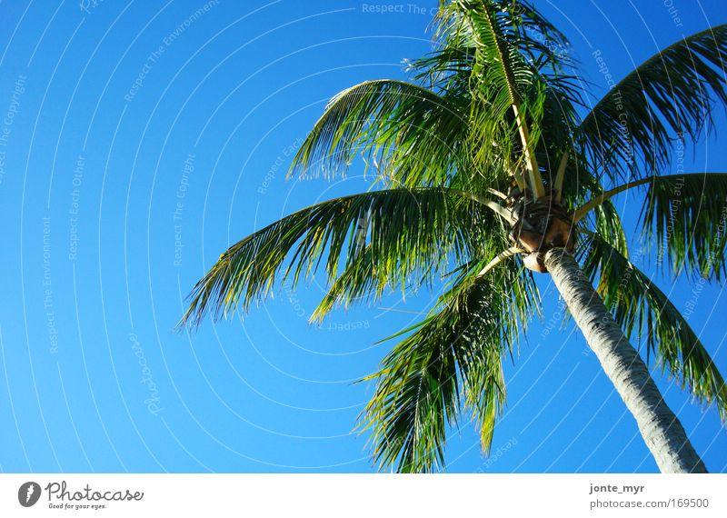 Lazy Day Ferien & Urlaub & Reisen Tourismus Natur Landschaft Pflanze Sommer Schönes Wetter Baum Grünpflanze exotisch Palme Kokosnuss Urwald Meer Golf von Mexico