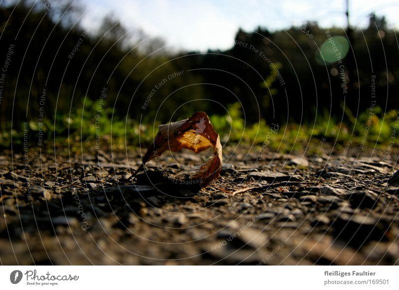 Blatt Natur Pflanze Blatt Herbst Stimmung braun Umwelt Zeit Erde ästhetisch rein Vergänglichkeit Unendlichkeit natürlich Verfall friedlich