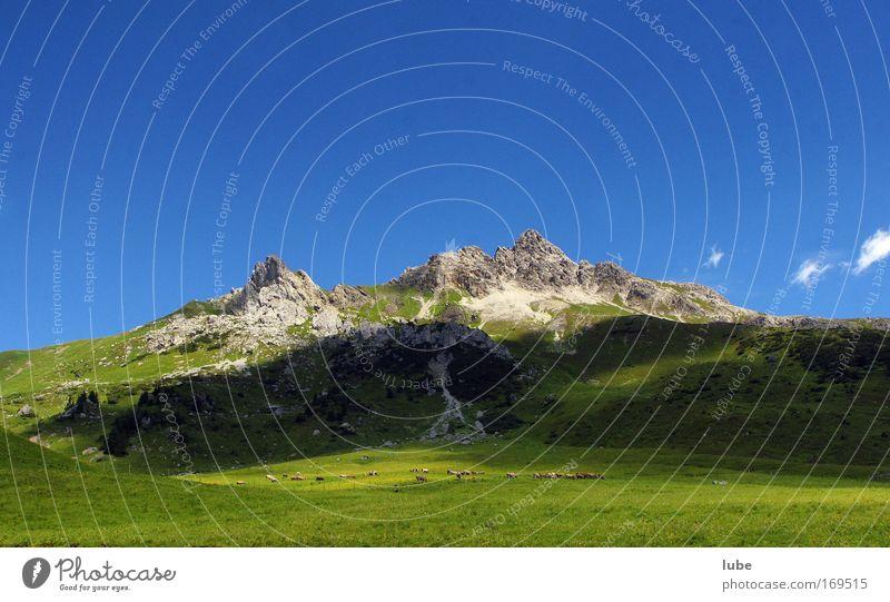 Viehherde im Grünen Natur grün Sommer Ferien & Urlaub & Reisen Wiese Gras Berge u. Gebirge Stein Landschaft Umwelt Horizont Felsen Ausflug Tourismus Alpen