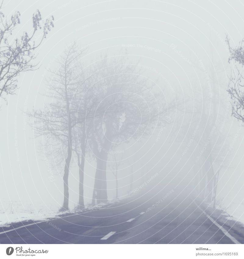 Nebelflucht Straße Landstraße kalt Winter kahl Allee Schnee Außenaufnahme Menschenleer