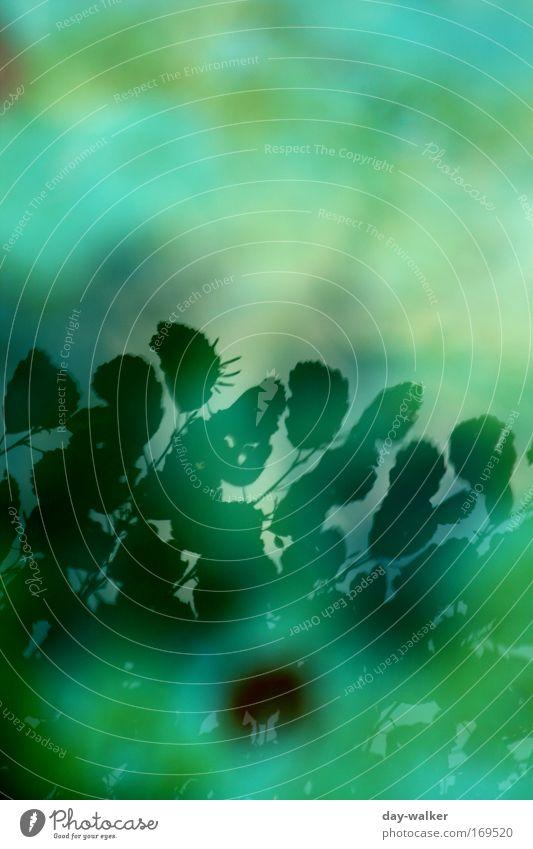 next Illusion Natur grün blau Pflanze Blatt Landschaft Grünpflanze