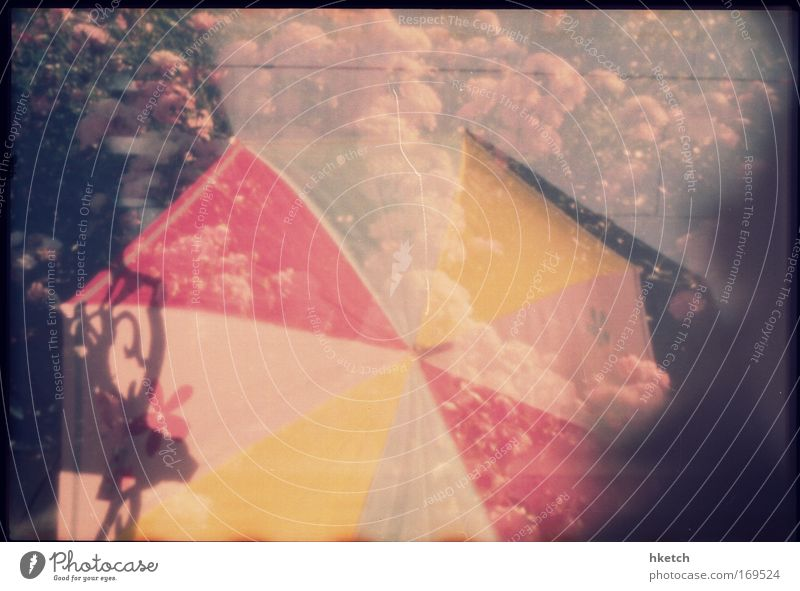 One Thousand Umbrellas Natur Blume Pflanze rot Sommer gelb Stil Blüte Garten Park Regen gehen Wind laufen nass