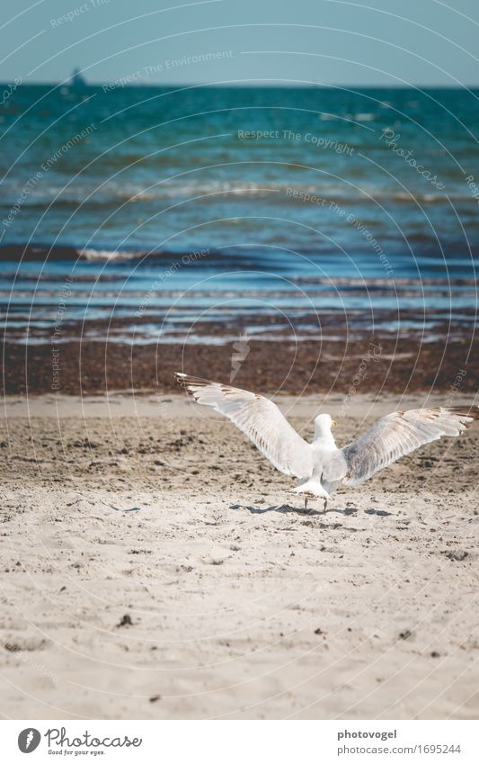 Abflug Himmel Natur blau Sommer Wasser weiß Meer Landschaft Erholung Tier Freude Strand Gefühle Küste Glück Freiheit
