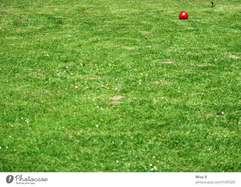 ein Gartenbild für Jutta Farbfoto mehrfarbig Außenaufnahme Menschenleer Natur Gras grün Ball Rasen Fußballplatz