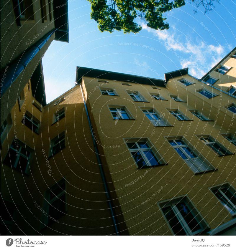 backyard tale Himmel blau Baum Pflanze Haus gelb Fenster Gebäude Fassade Bauwerk Wolkenloser Himmel eckig Stadthaus