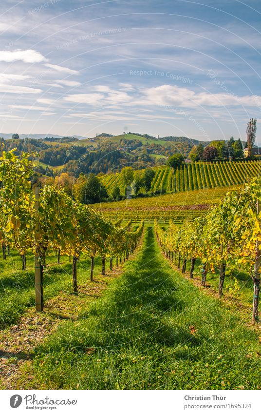 Weingärten harmonisch Wohlgefühl Zufriedenheit Erholung ruhig Ausflug Abenteuer Ferne Freiheit Sightseeing Sommer Sommerurlaub Berge u. Gebirge wandern Umwelt
