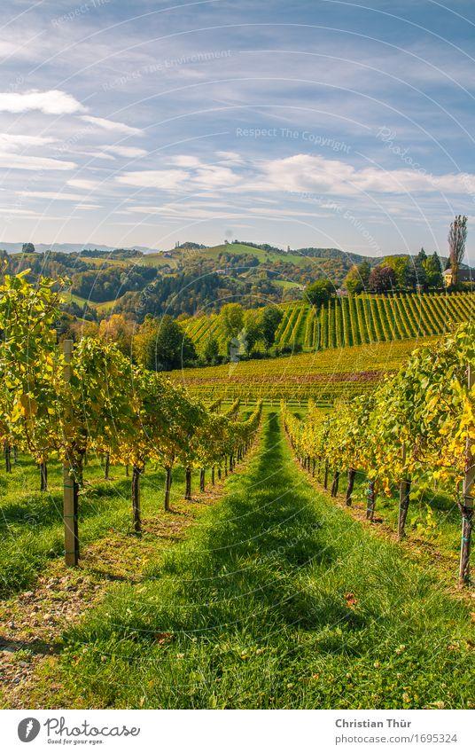 Weingärten Himmel Natur Pflanze Sommer Landschaft Erholung Wolken ruhig Ferne Berge u. Gebirge Umwelt Gefühle Freiheit Stimmung Zufriedenheit Feld