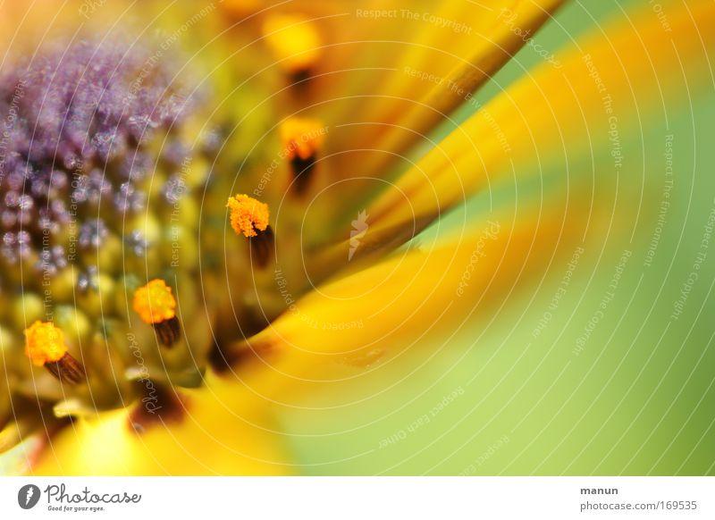 soft flower Natur schön Blume grün Sommer gelb Stil Blüte Frühling hell Design Fröhlichkeit ästhetisch violett Dekoration & Verzierung rein