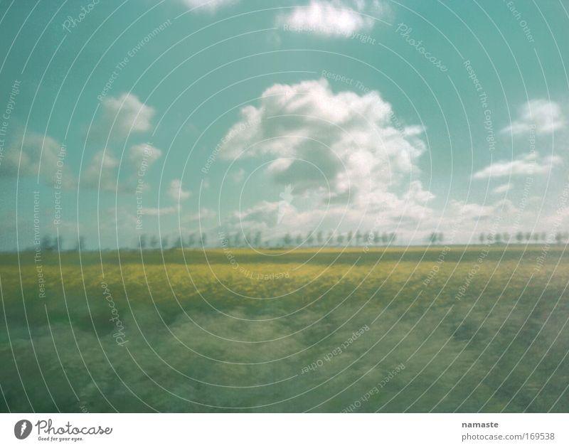 alles nur ein traum Natur grün Ferien & Urlaub & Reisen Sommer Freude Wolken Umwelt Landschaft Straße Glück Luft Zufriedenheit Feld groß Fröhlichkeit