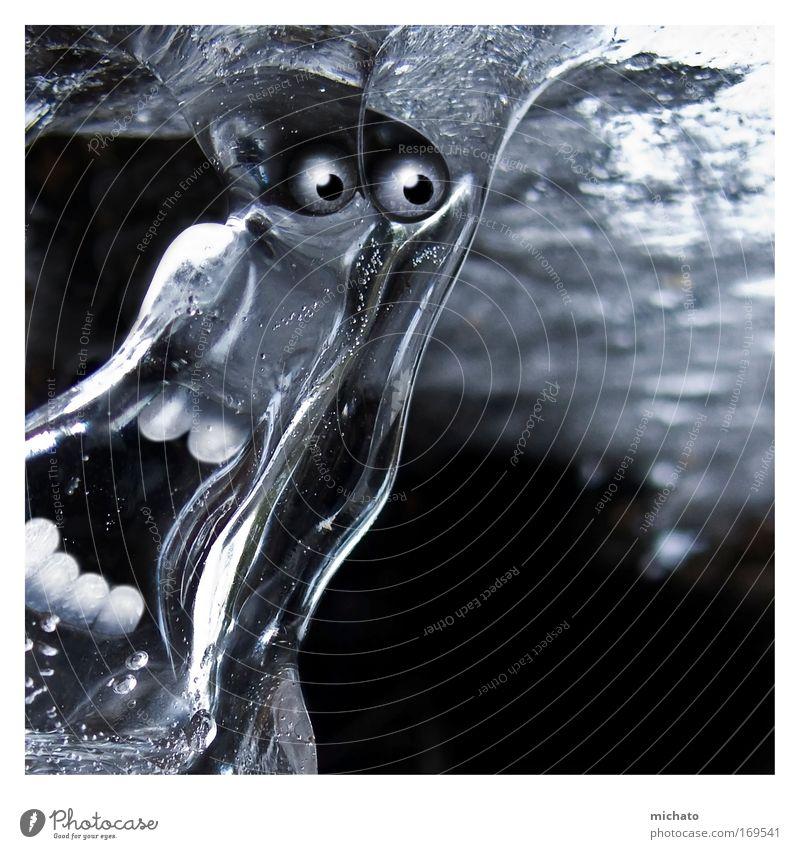 Hilfe, der Sommer kommt Farbfoto Außenaufnahme Detailaufnahme Experiment Menschenleer Reflexion & Spiegelung Blick in die Kamera Natur Wasser Winter Eis Frost