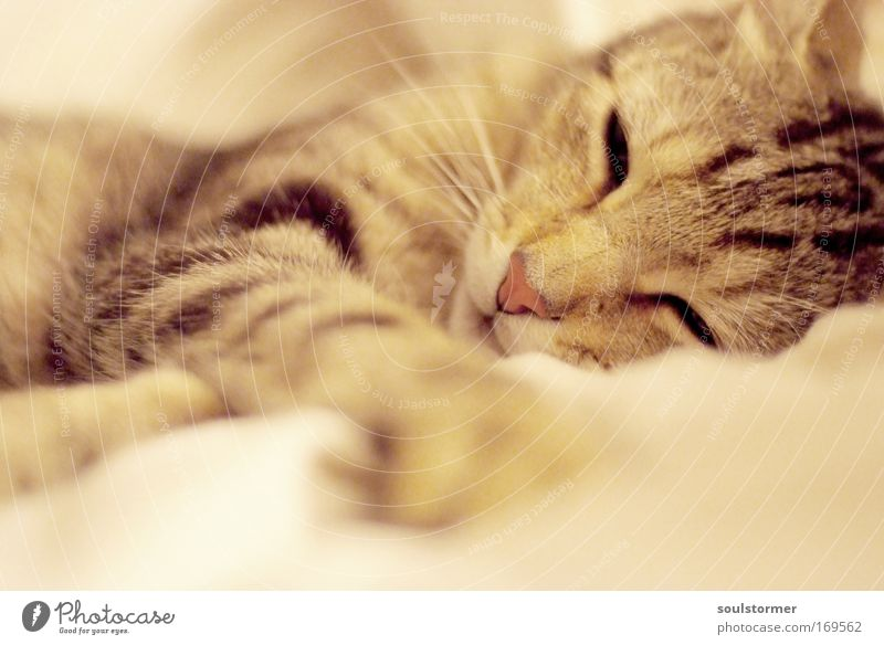 Katzenalarm!!! schön schwarz Tier Erholung Gefühle Glück träumen Zufriedenheit braun glänzend elegant schlafen Fröhlichkeit weich Schutz