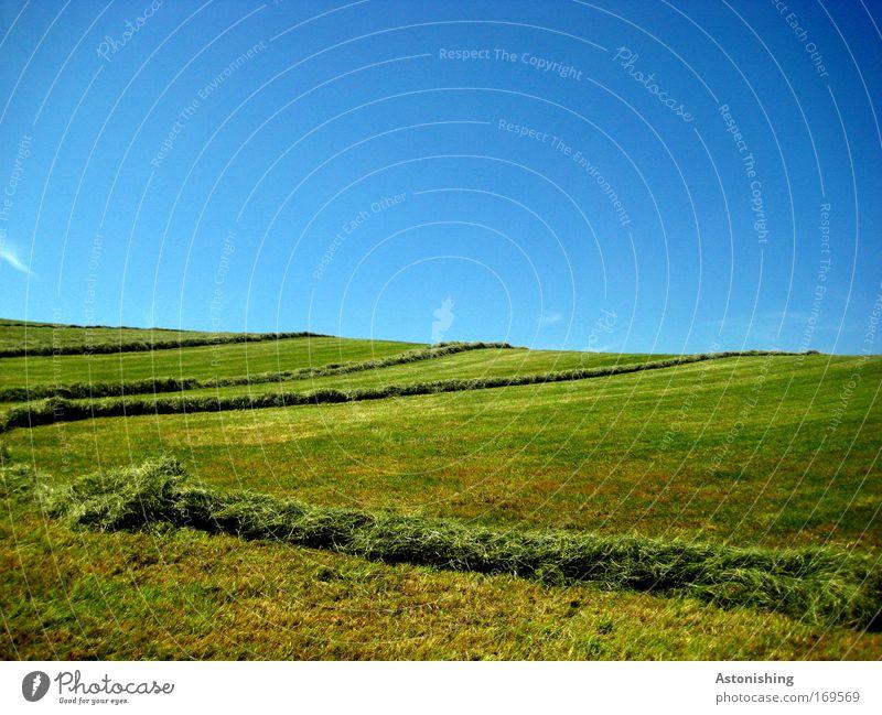 gestreifter Boden Umwelt Natur Landschaft Erde Himmel Wolkenloser Himmel Sommer Wetter Schönes Wetter Pflanze Gras Wiese Hügel schön Wärme blau grün Linie mähen