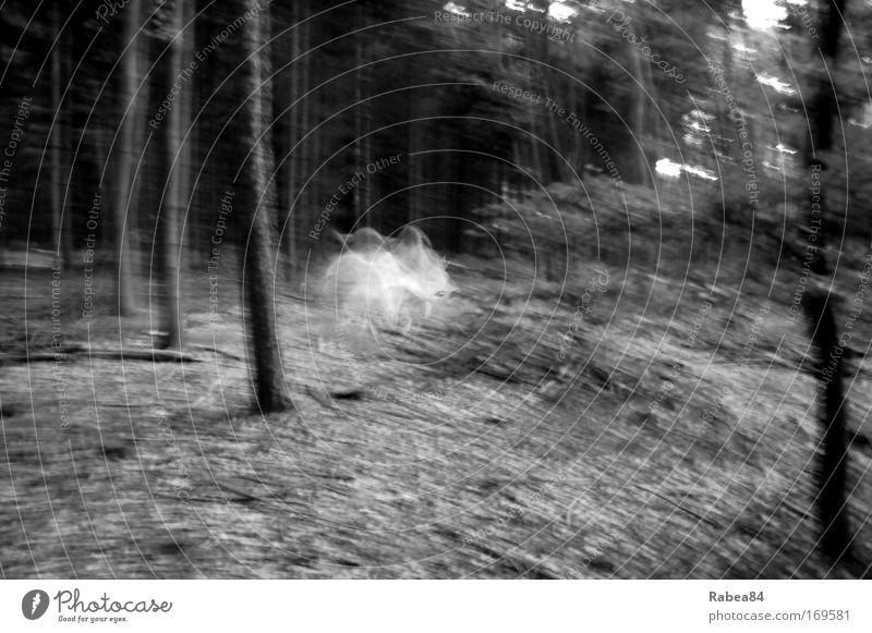 Holla die Waldfee tanzt Natur weiß Baum schwarz grau Stimmung Tanzen elegant ästhetisch Fröhlichkeit Romantik beobachten gruselig entdecken skurril