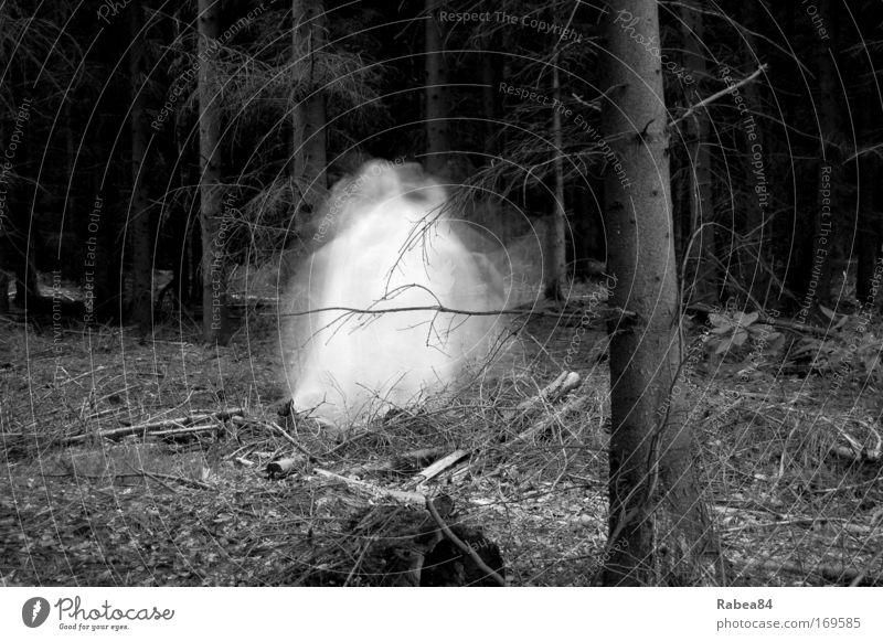 unheimliche Waldbewohner Dämmerung Langzeitbelichtung Bewegungsunschärfe 1 Mensch Natur Baum außergewöhnlich dunkel gruselig grau schwarz weiß Stimmung spukhaft