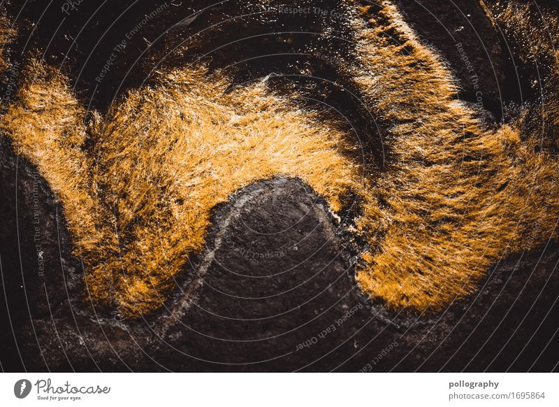 nowhere in norway (6) Umwelt Natur Landschaft Pflanze Tier Erde Sommer Herbst Schönes Wetter Gras Moos Grünpflanze Wildpflanze exotisch Wasser Farbfoto