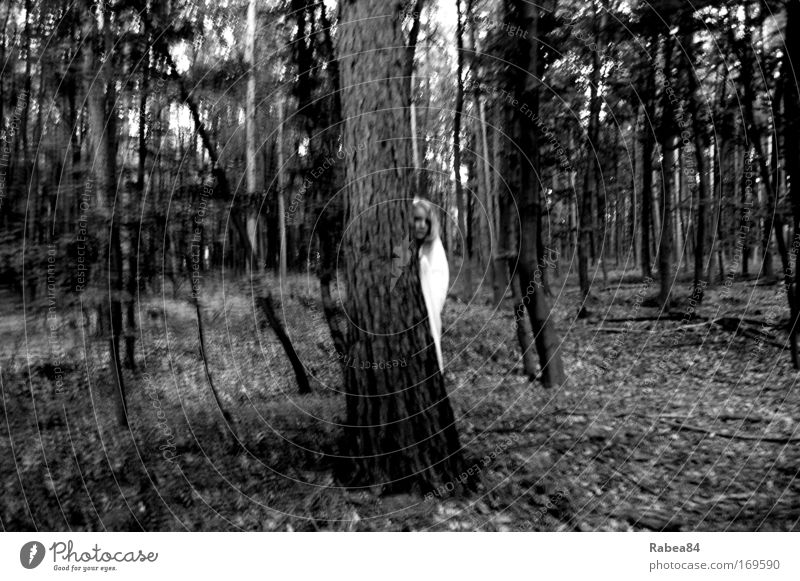 Feenzauber Schwarzweißfoto Außenaufnahme Dämmerung Blick feminin 1 Mensch Natur Baum Wald beobachten dunkel Neugier grau schwarz Stimmung Schutz Interesse Angst
