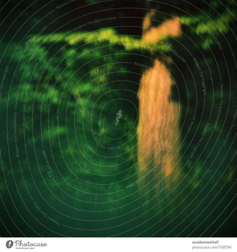 Wood Farbfoto mehrfarbig Außenaufnahme Experiment Menschenleer Tag Kontrast Unschärfe Natur Landschaft Sommer Pflanze Baum Gras Wiese Wald gelb gold grün