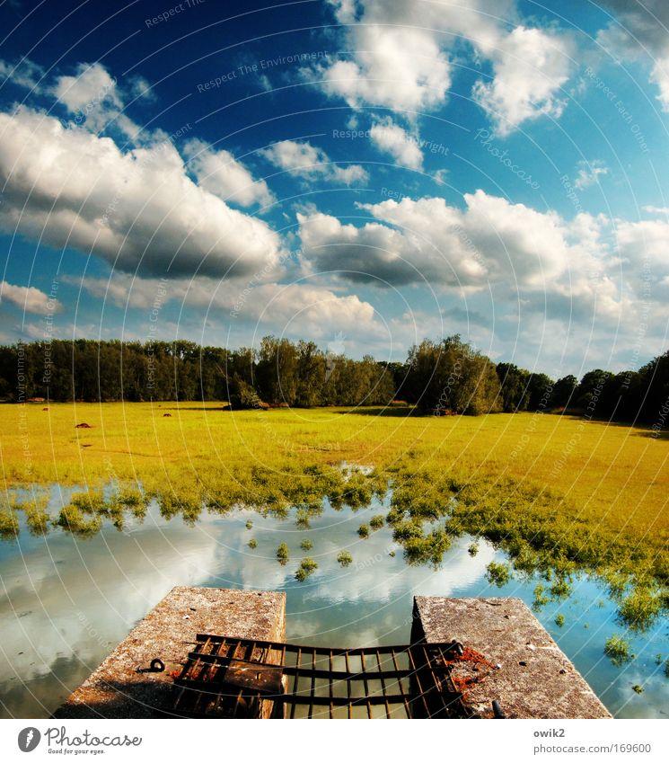 Flusensieb Umwelt Natur Landschaft Pflanze Urelemente Erde Luft Wasser Himmel Wolken Horizont Frühling Klima Schönes Wetter Baum Gras Seeufer blau mehrfarbig