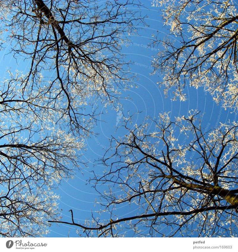 Schaafskälte? Himmel blau weiß Baum Winter Wald kalt Eis Frost frieren