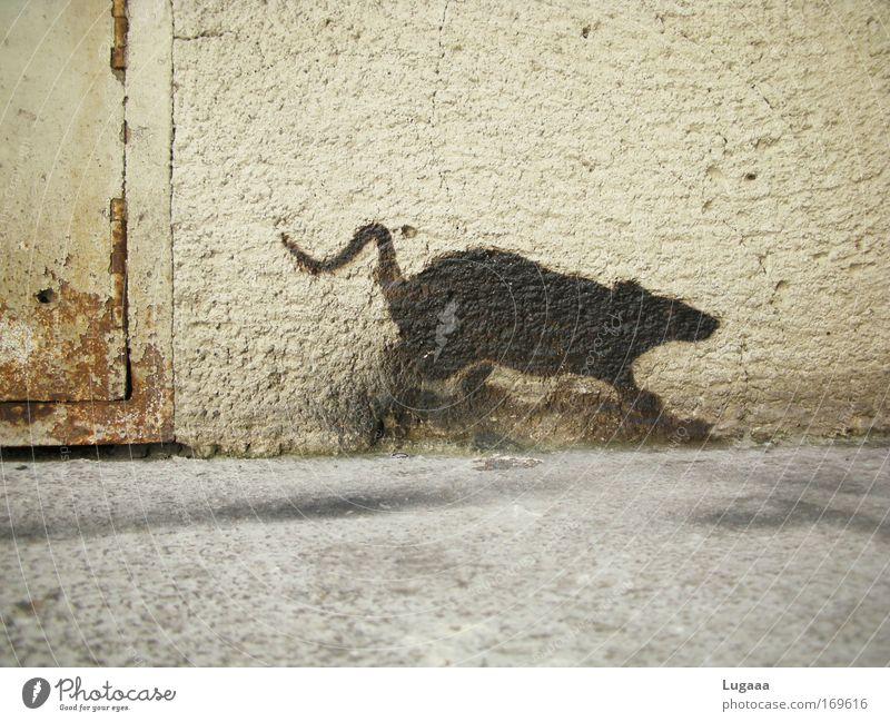 Wand(er)ratte Stadt Haus Tier Straße grau Stein Gebäude Graffiti Angst Kunst Fassade rennen Häusliches Leben fangen Bauwerk Ekel