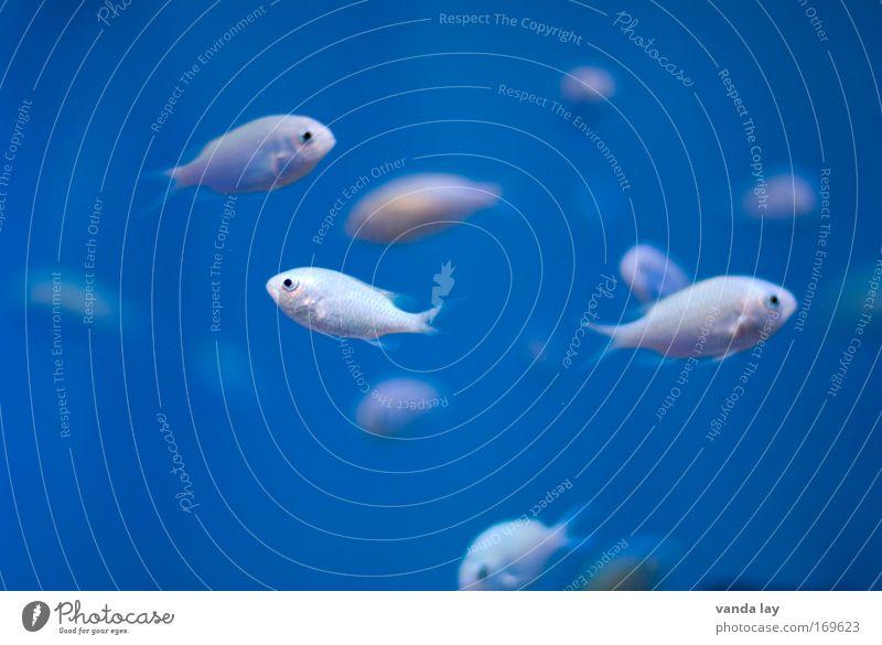 Frischer Fisch Farbfoto Unterwasseraufnahme Menschenleer Textfreiraum links Textfreiraum rechts Textfreiraum oben Textfreiraum unten Textfreiraum Mitte