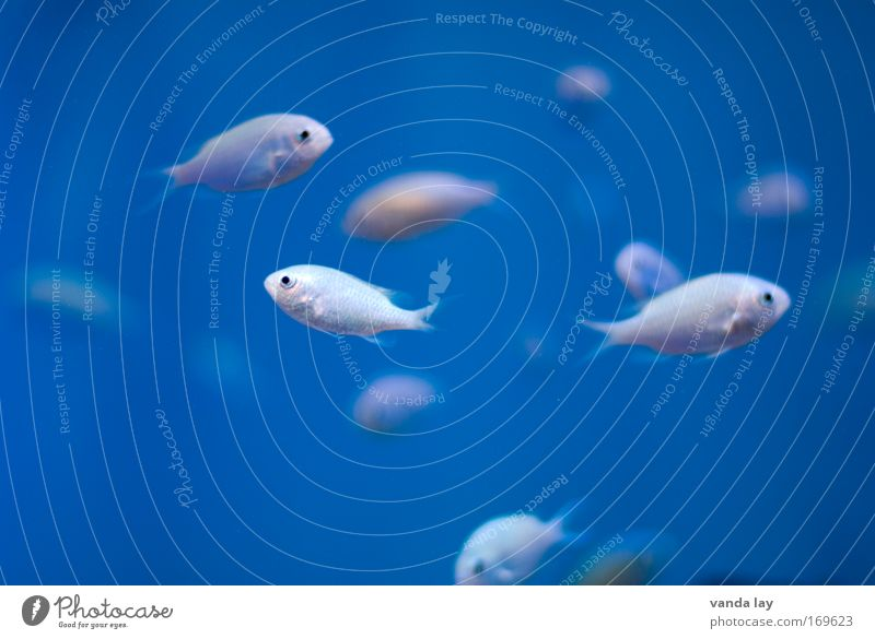 Frischer Fisch Wasser weiß Meer blau Tier elegant frei tief Aquarium exotisch Angeln Schwarm Schuppen