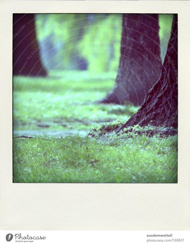 Park Natur Baum Pflanze ruhig Einsamkeit Wald Wiese Gras Frühling Landschaft Umwelt Duft Polaroid Schönes Wetter