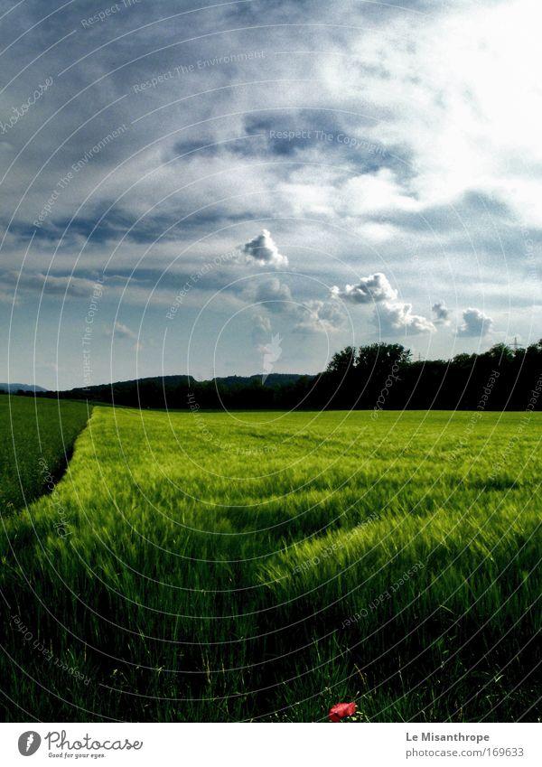 'Velvet Green' weiß grün Sommer ruhig schwarz Wolken Einsamkeit Farbe Leben Gras träumen Denken Landschaft Zufriedenheit hell Kraft