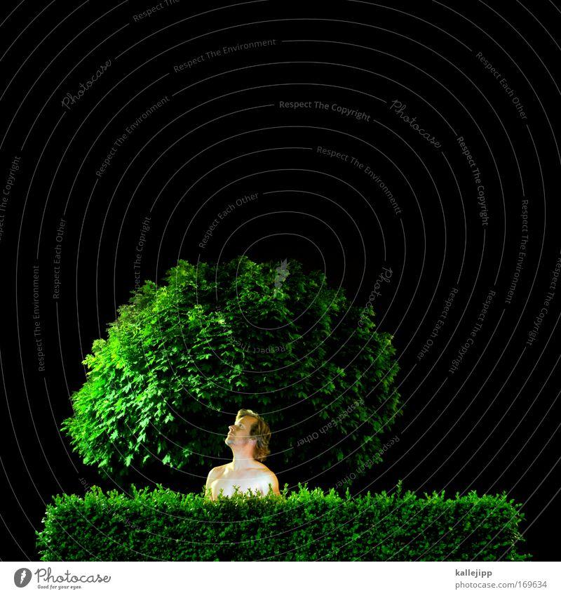 baumkrone Mensch Mann nackt Park Garten Hecke Sträucher Baum Nacht Versteck grün schwarz Blick Show beobachten Blatt ökologisch Bioprodukte