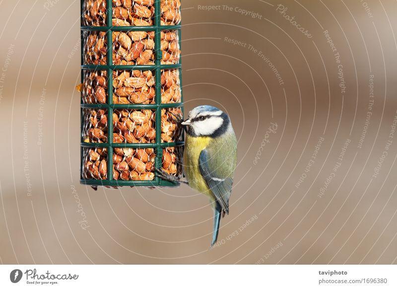 Natrix Natrix - Ringelnatter, jugendlich auf Sand nahe dem Schwarzen Meer Natur blau Farbe schön Tier Winter gelb Essen klein Garten Vogel wild sitzen Feder