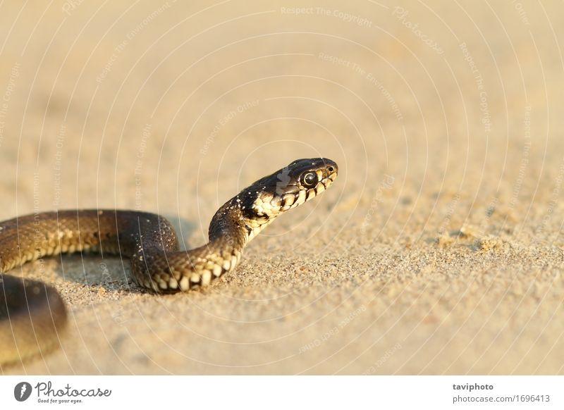 Natur Jugendliche Sommer schön Tier Strand Leben Gras klein Sand wild Angst Boden Lebewesen Kurve krabbeln