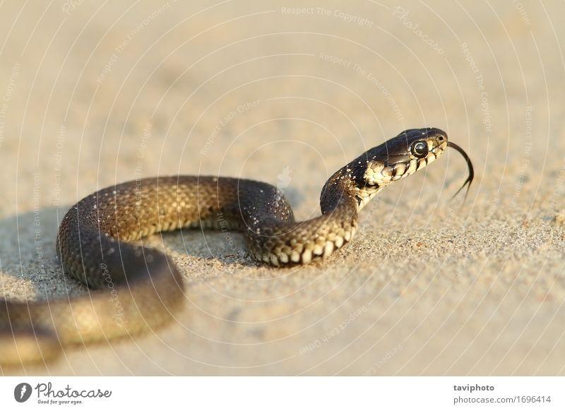 Natur Jugendliche Tier Strand schwarz Gras klein Sand wild Angst Boden Lebewesen Kurve krabbeln Schlange Reptil
