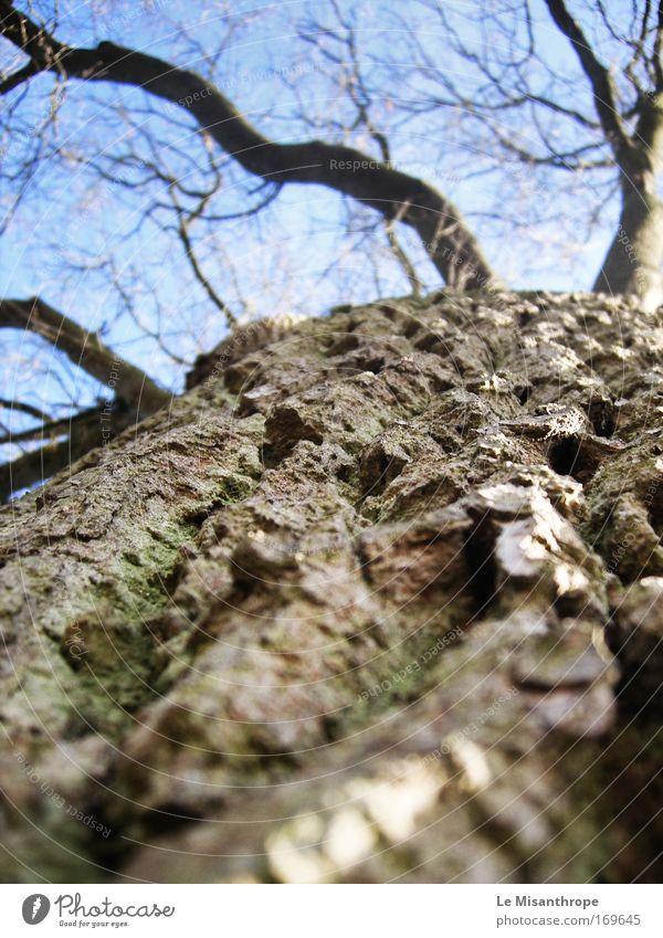 Rinde Natur blau Baum Einsamkeit ruhig Umwelt Freiheit braun Deutschland Wachstum stehen frei Zukunft Warmherzigkeit beobachten Sicherheit