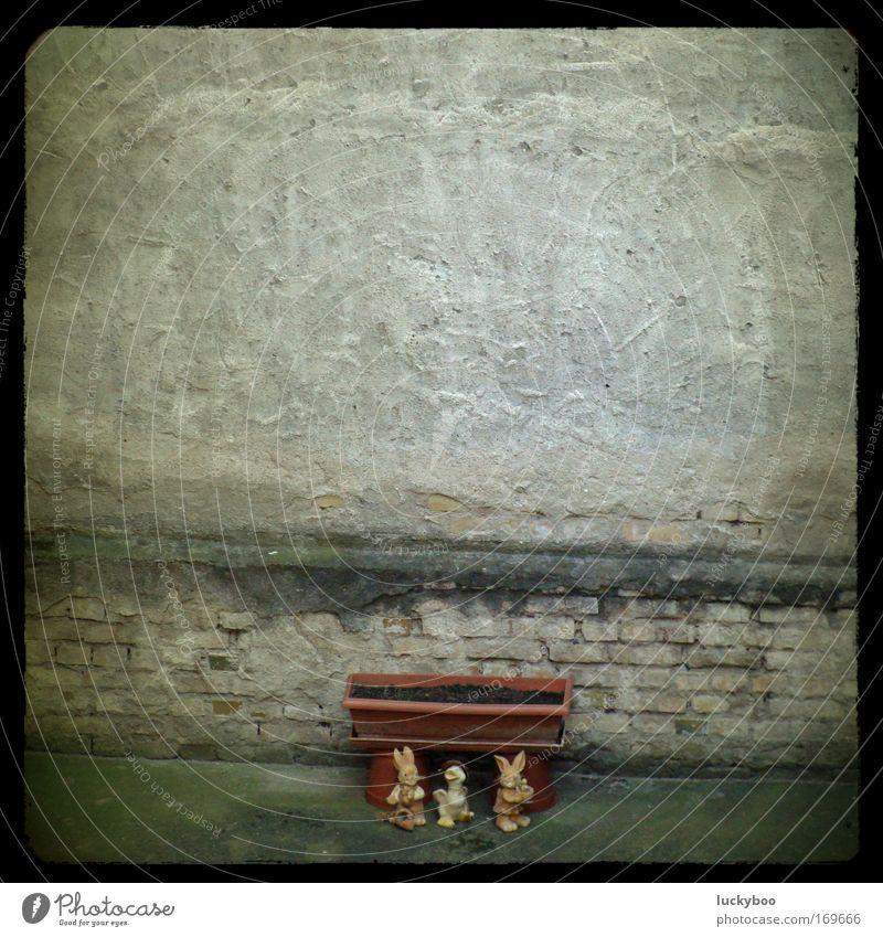 Vom sozialen Abstieg der Osterhasen nach dem Feste ... Einsamkeit Tier Wand Stein Traurigkeit Mauer dreckig Beton trist Ostern Tiergruppe Wandel & Veränderung Kitsch Vergänglichkeit Verfall trashig