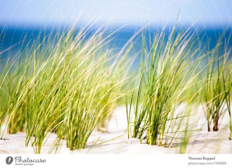 Grün am Meer Umwelt Natur Landschaft Pflanze Sand Wasser Himmel Frühling Schönes Wetter Wind Wärme Gras Sträucher Grünpflanze Küste Strand Ostsee Gesundheit