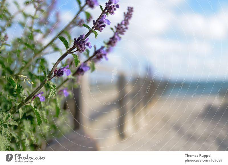 Li-La am Steg Natur Wasser Himmel Meer Blume grün Pflanze Sommer Strand Ferien & Urlaub & Reisen Wolken Frühling Freiheit Sand Landschaft