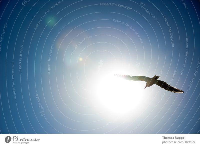 Auf und davon Natur Himmel Sonne Meer blau Sommer Ferien & Urlaub & Reisen Tier Frühling Freiheit Vogel Küste Unendlichkeit leuchten Wildtier Schönes Wetter