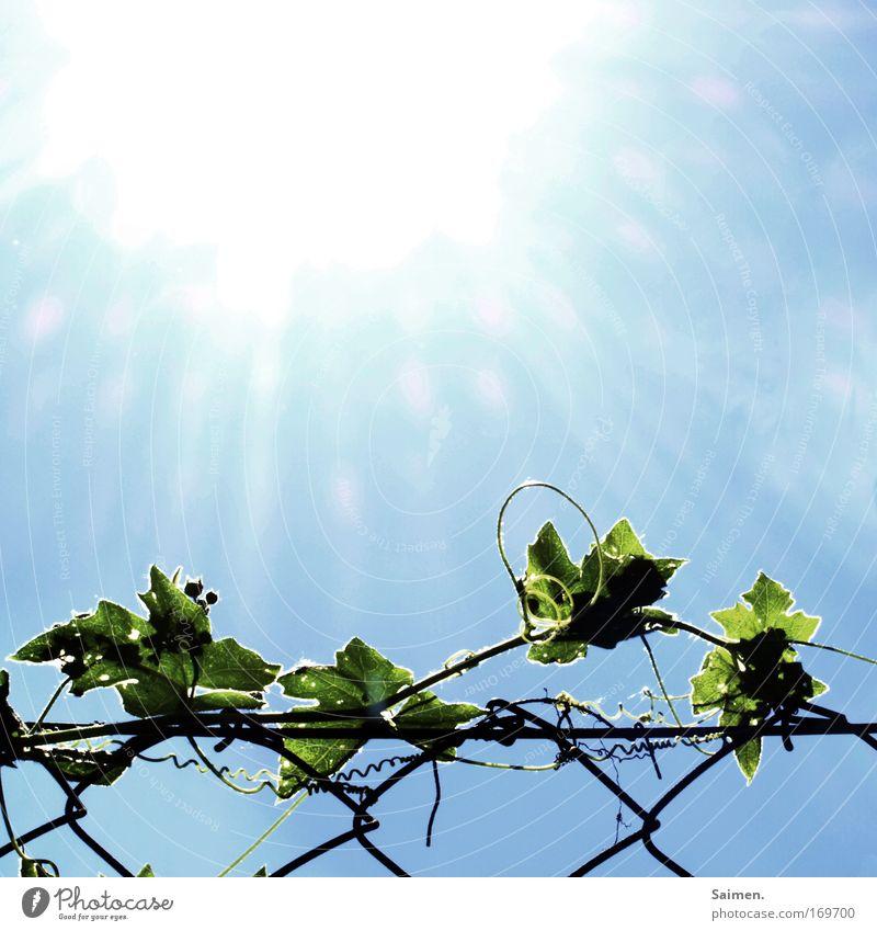 Leben (PC USERTREFFEN FFM) Himmel Natur schön Pflanze Sonne Ferien & Urlaub & Reisen Sommer Blatt Farbe Umwelt Wärme Horizont modern Klima heiß Zaun