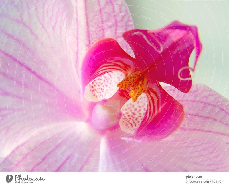 Zarte Schönheit Farbfoto Innenaufnahme Studioaufnahme Nahaufnahme Detailaufnahme Makroaufnahme Hintergrund neutral Schwache Tiefenschärfe elegant