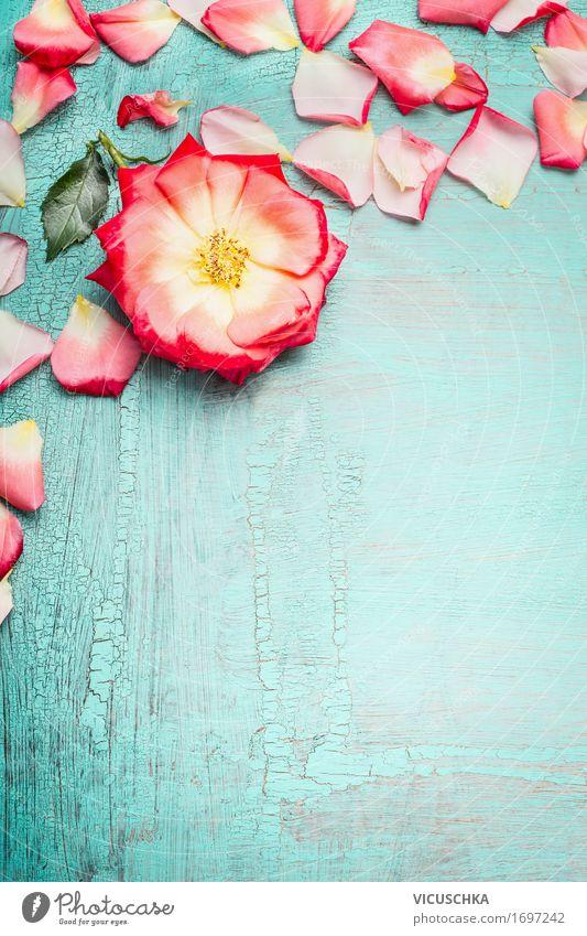Rose mit Blütenblätter auf blau türkis Shabby Chic Hintergrund Natur Pflanze Sommer Blume Blatt Blüte Liebe Hintergrundbild Stil Feste & Feiern Design rosa Dekoration & Verzierung Geburtstag retro Geschenk