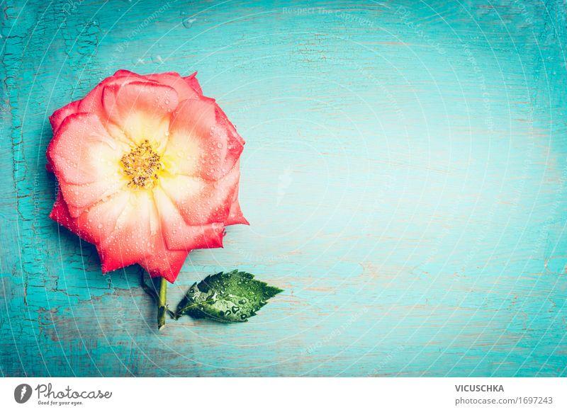 Rosa Blume auf türkis Shabby Chic Hintergrund blau Pflanze Sommer Blatt Blüte Liebe Stil Feste & Feiern rosa Design Dekoration & Verzierung Geburtstag retro