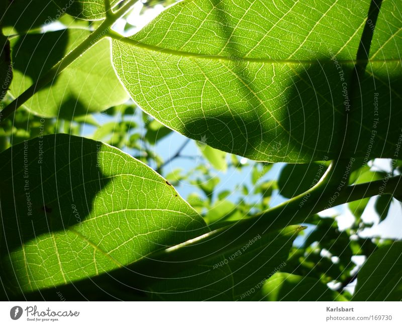 zwischen. den zweigen. zwei schatten. Himmel Natur Pflanze grün Sommer Erholung Blatt Umwelt Leben Frühling Park Design genießen Klima Ast Lebensfreude
