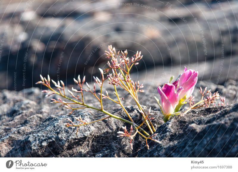 Himmel Natur Ferien & Urlaub & Reisen blau Sommer schön Blume Landschaft Erholung Wolken Wald Berge u. Gebirge Umwelt Wege & Pfade Wiese Herbst