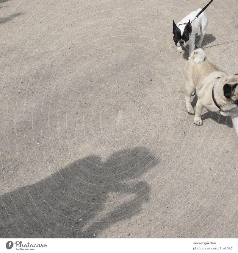 doggy style. Mensch Hund Sommer Freude Tier Wege & Pfade klein Park Erde laufen Ausflug niedlich Spaziergang beobachten Neugier Verliebtheit
