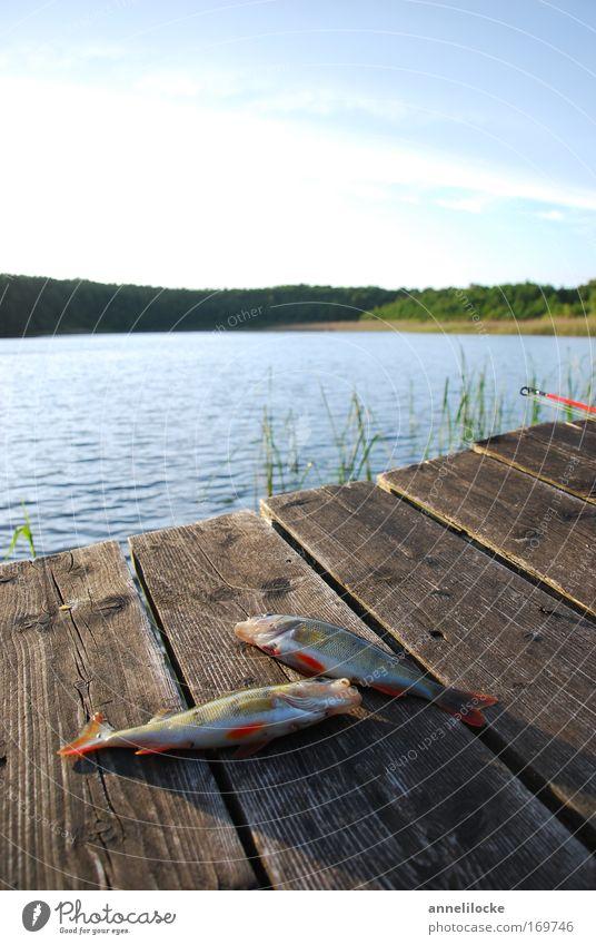 gelandet und abgehakt Himmel Sommer Tier Erholung Landschaft See Wildtier Freizeit & Hobby Lebensmittel Erfolg Ernährung Fisch Schönes Wetter Fluss Seeufer