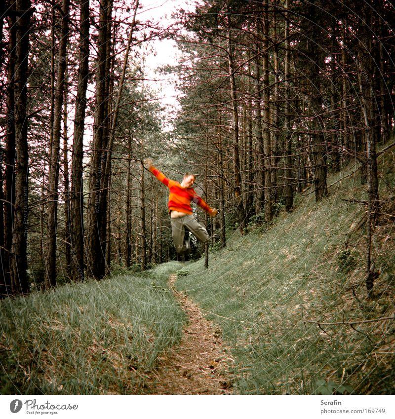 Antigravitationswald Mensch Mann Natur Jugendliche Freude Erwachsene Wald Herbst Landschaft springen Stil Stimmung Freizeit & Hobby wandern Ausflug maskulin