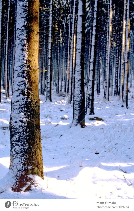 abkühlung Sonne Winter Wald kalt Schnee Jahreszeiten Baumstamm Strahlung Tanne Baumrinde Waldboden